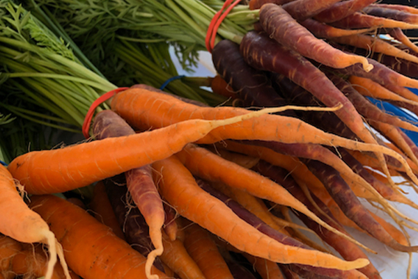 Fresh carrots from Fountain of Youth Gardens